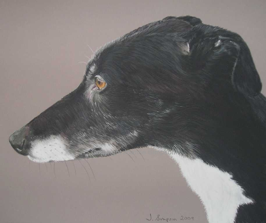 Lurcher portrait by Joanne Simpson