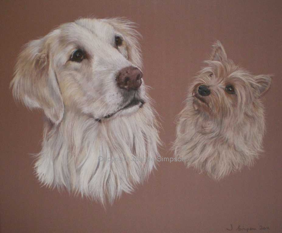 Golden Retriever pet portrait by Joanne Simpson.