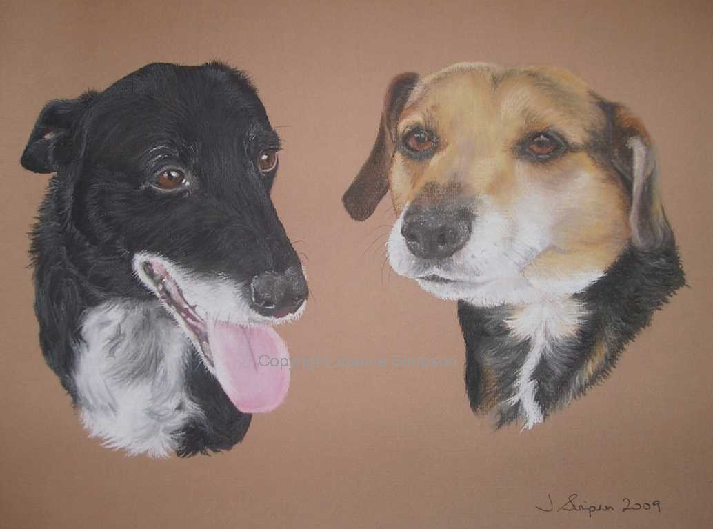 Cross breed pet portrait by Joanne Simpson
