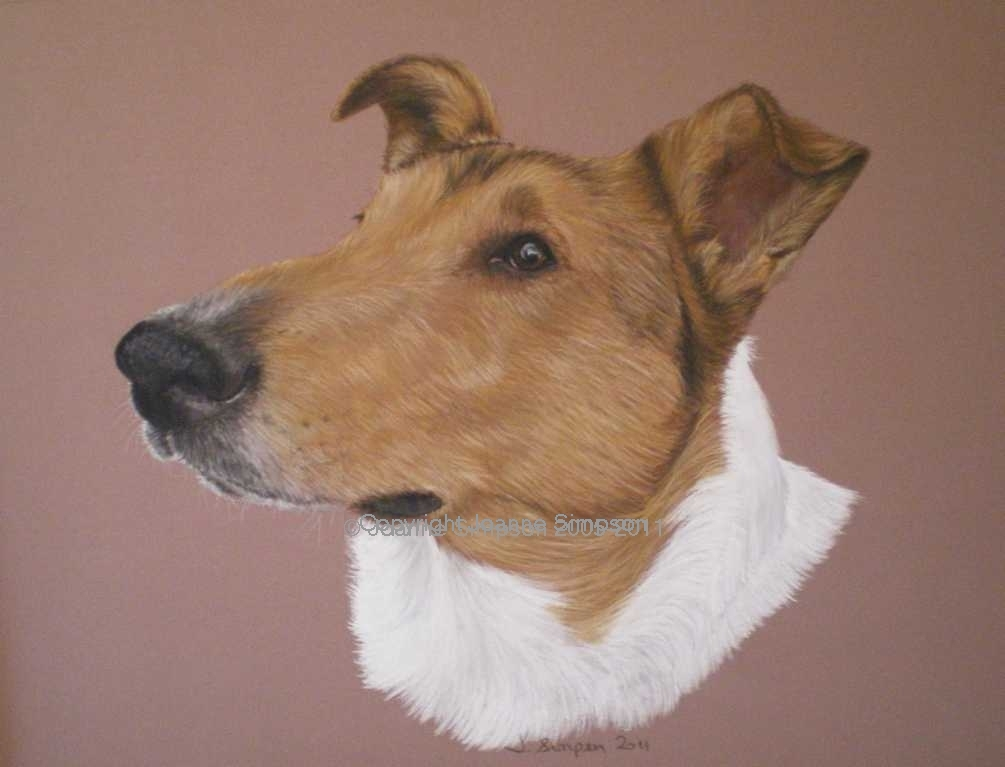 Smooth haired Collie pet portrait by Joanne Simpson