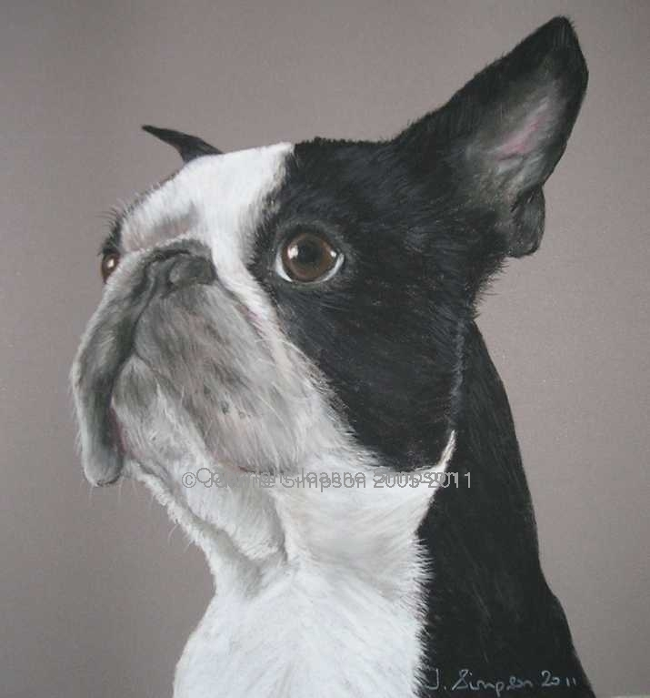 Boston Terrier pet portrait by Joanne Simpson