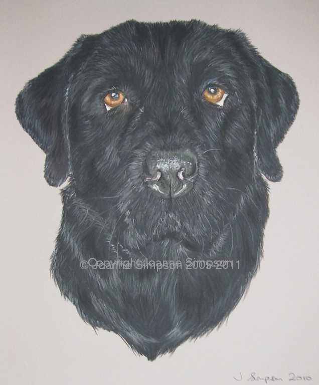 Black Labrador pet portrait by Joanne Simpson