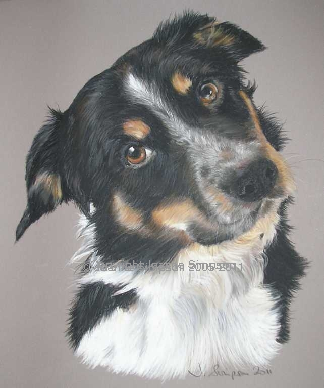 Border Collie pet portrait by Joanne Simpson