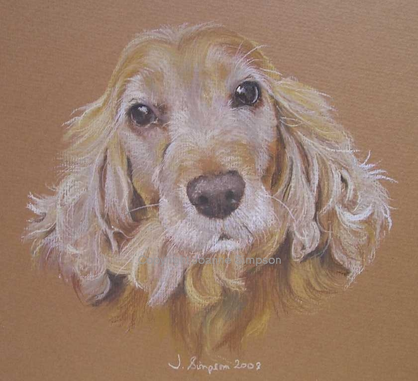 Cocker Spaniel portrait by Joanne Simpson.